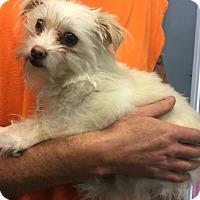 Adopt A Pet :: Chief - Harrisonburg, VA