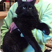 Adopt A Pet :: Onyx - Avon Park, FL