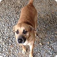 Adopt A Pet :: Buffy - Rockmart, GA