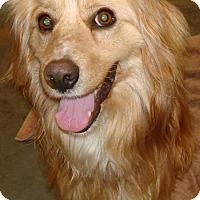 Adopt A Pet :: Ren - Kalamazoo, MI