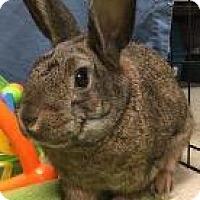 Adopt A Pet :: Meadow - Woburn, MA