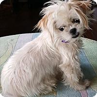 Adopt A Pet :: Jamie - La Habra Heights, CA