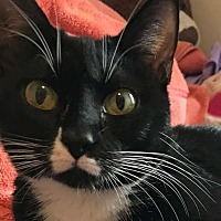 Adopt A Pet :: Lily - Midvale, UT