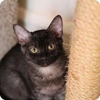Adopt A Pet :: Truffle - Chicago, IL