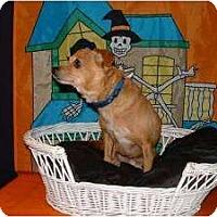 Adopt A Pet :: PRINCE CHARMING - Seattle, WA