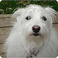 Adopt A Pet :: Nikki - Rigaud, QC