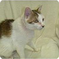Adopt A Pet :: Miss Olcott - Hamburg, NY