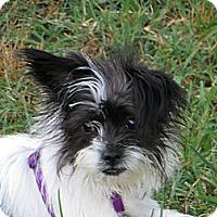Adopt A Pet :: Lilly - McLoud, OK