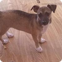 Adopt A Pet :: Gorgeous Guy - Madison, NJ