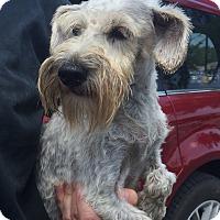 Adopt A Pet :: Vanna - St. Petersburg, FL