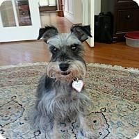 Adopt A Pet :: Kenya - Laurel, MD