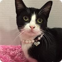 Adopt A Pet :: Ziggy - Pasadena, TX