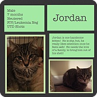 Adopt A Pet :: Jordan - CLEVELAND, OH
