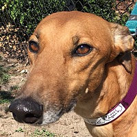 Adopt A Pet :: Travel Agent - Longwood, FL