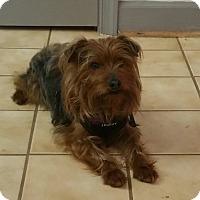 Adopt A Pet :: Mr. Scruffy Face - Alexandria, VA