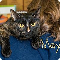 Adopt A Pet :: Maya - Somerset, PA