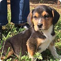 Adopt A Pet :: ALEX BARKLEY - Waldron, AR