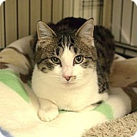 Adopt A Pet :: Hugo - Ocean City, NJ