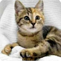 Adopt A Pet :: Tamika - Modesto, CA