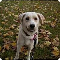 Adopt A Pet :: Dinah - Washington, NC