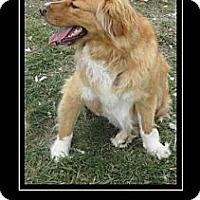 Adopt A Pet :: Echo (aka Angel) - Copperas Cove, TX