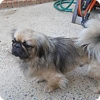 Adopt A Pet :: Donnie - Charlotte, NC
