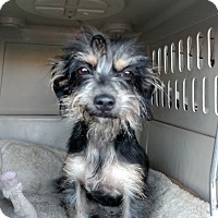 Adopt A Pet :: Helene - Simi Valley, CA