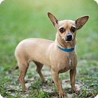 Adopt A Pet :: Abigail - Daleville, AL