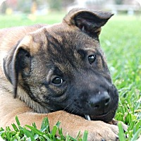 Adopt A Pet :: Ellie - Ormond Beach, FL