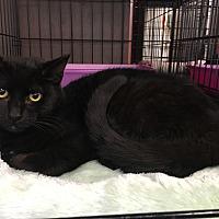 Adopt A Pet :: Romeo - Cerritos, CA