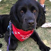Adopt A Pet :: Nigel - Sugarland, TX