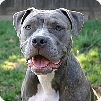 Adopt A Pet :: Skye - Auburn, CA