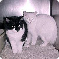 Adopt A Pet :: Cloud and Oreo - East Hanover, NJ