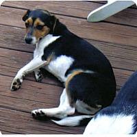 Adopt A Pet :: LuLu - Little River, SC