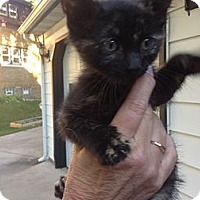 Adopt A Pet :: Monkey - Menomonee Falls, WI