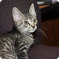 Adopt A Pet :: Timber (LE) - Little Falls, NJ