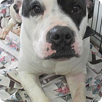 Adopt A Pet :: BUSTER - Cornwall, ON