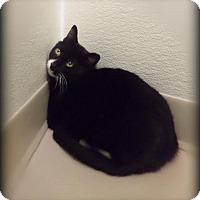 Adopt A Pet :: Linus - Pekin, IL