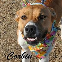 German Shepherd Dog Mix Dog for adoption in Davis, Oklahoma - Corbin OKs31
