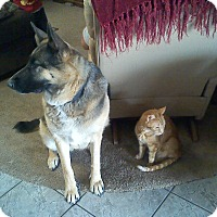 Adopt A Pet :: Sasha - Victorville, CA