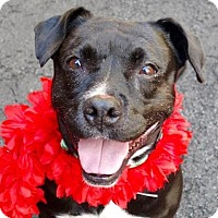 Adopt A Pet :: Domino - Prospect, CT