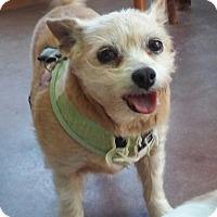 Adopt A Pet :: Toby - Creston, CA