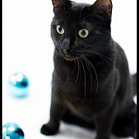 Adopt A Pet :: Princess Zelda - Belton, MO