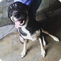 Adopt A Pet :: Vanna - Pompton Lakes, NJ