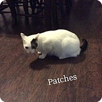Adopt A Pet :: Patches - Somerset, KY