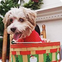 Adopt A Pet :: Miles - Rancho Santa Fe, CA