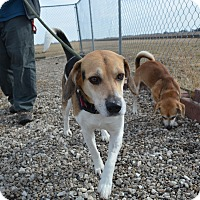 Adopt A Pet :: Polly - Grinnell, IA