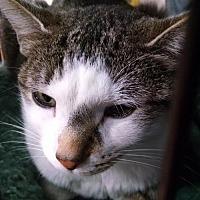 Adopt A Pet :: Lena - Columbus, OH