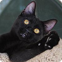 Adopt A Pet :: Swirl - Palmdale, CA
