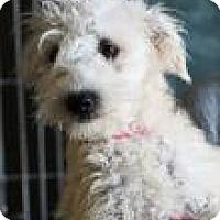 Adopt A Pet :: Juniper - Phoenix, AZ